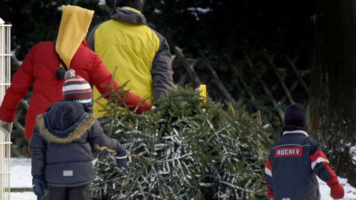 niedersachsen wollen weihnachtsbaum selbst schlagen. Black Bedroom Furniture Sets. Home Design Ideas