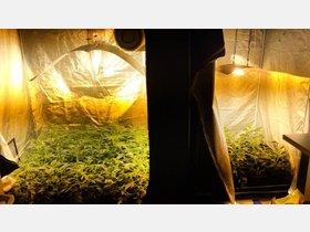 Polizei entdeckt in Niedersachsen mehr Cannabis-Plantagen - kreiszeitung.de