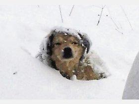 Westerveseder Tierschützerin kämpft für Straßenhunde in Rumänien und wirbt ... - kreiszeitung.de