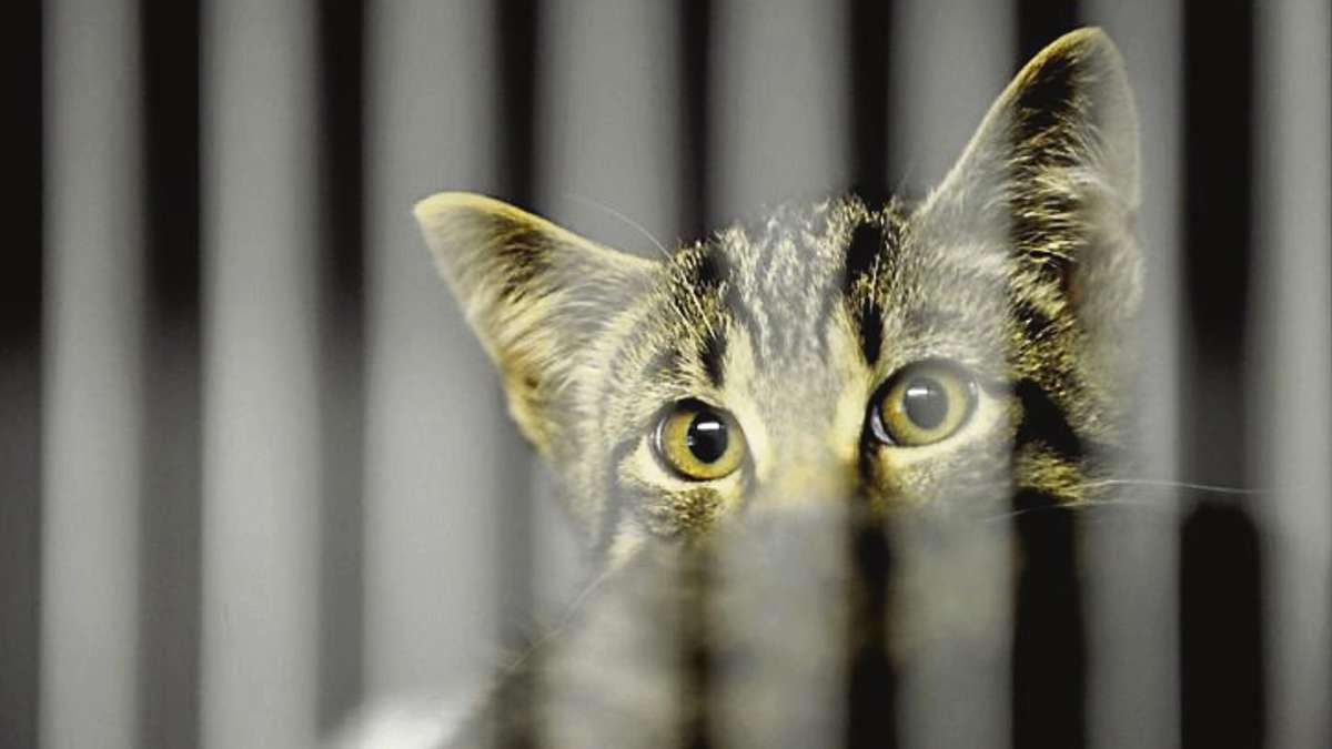 20 katzen get tet anklage gegen zwei betreiber des tierheims bergedorf wildeshausen. Black Bedroom Furniture Sets. Home Design Ideas