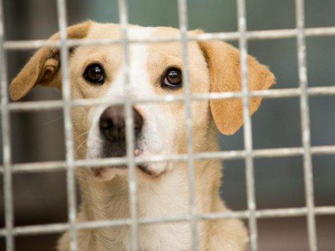 So wie Labrador-Mischling Kira suchen viele Hunde im Tierheim Berlin einen neuen Halter.