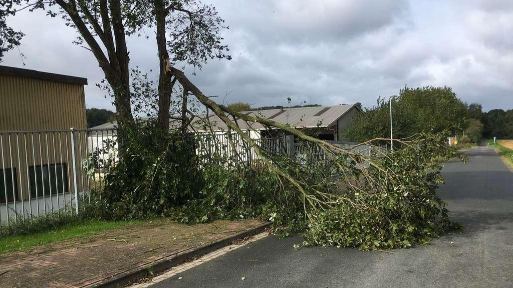 Sturmschäden in Syke
