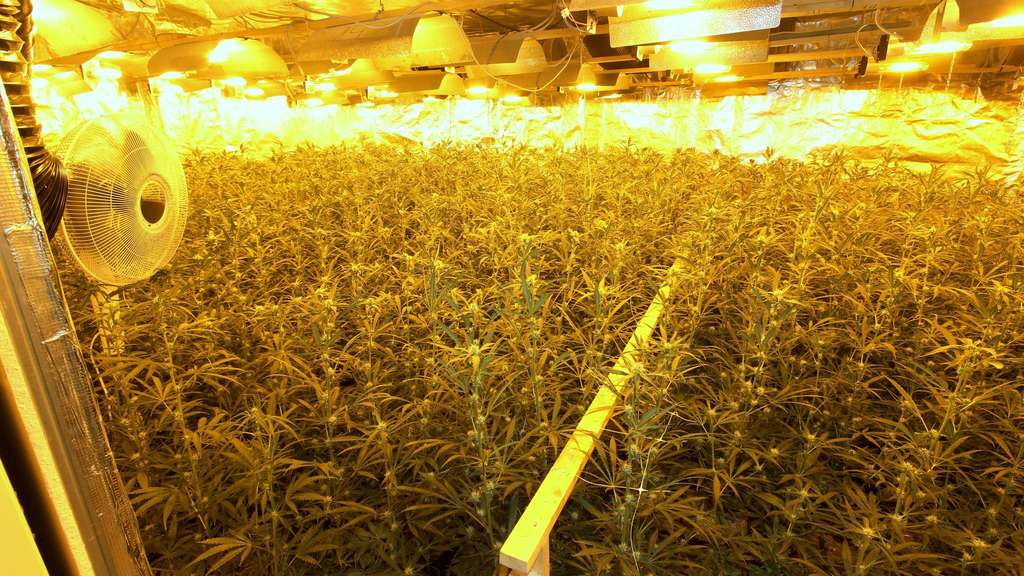 Ermittler finden riesige Marihuana-Plantage unter Bremer Lagerhalle