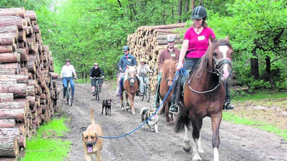pferd hund und mensch zeigen sich als gutes team