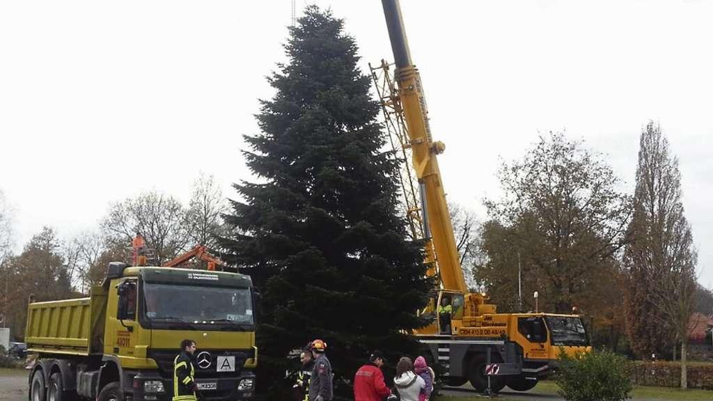 Baum und Beleuchtung sorgen für Stimmung | Wardenburg