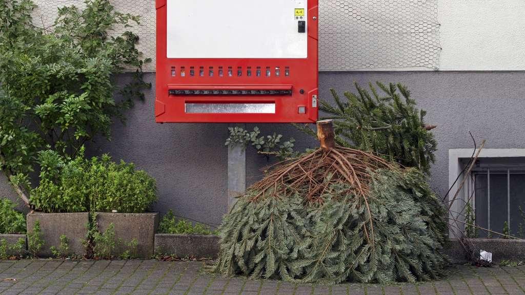 geh rt der weihnachtsbaum zum fest dazu niedersachsen. Black Bedroom Furniture Sets. Home Design Ideas