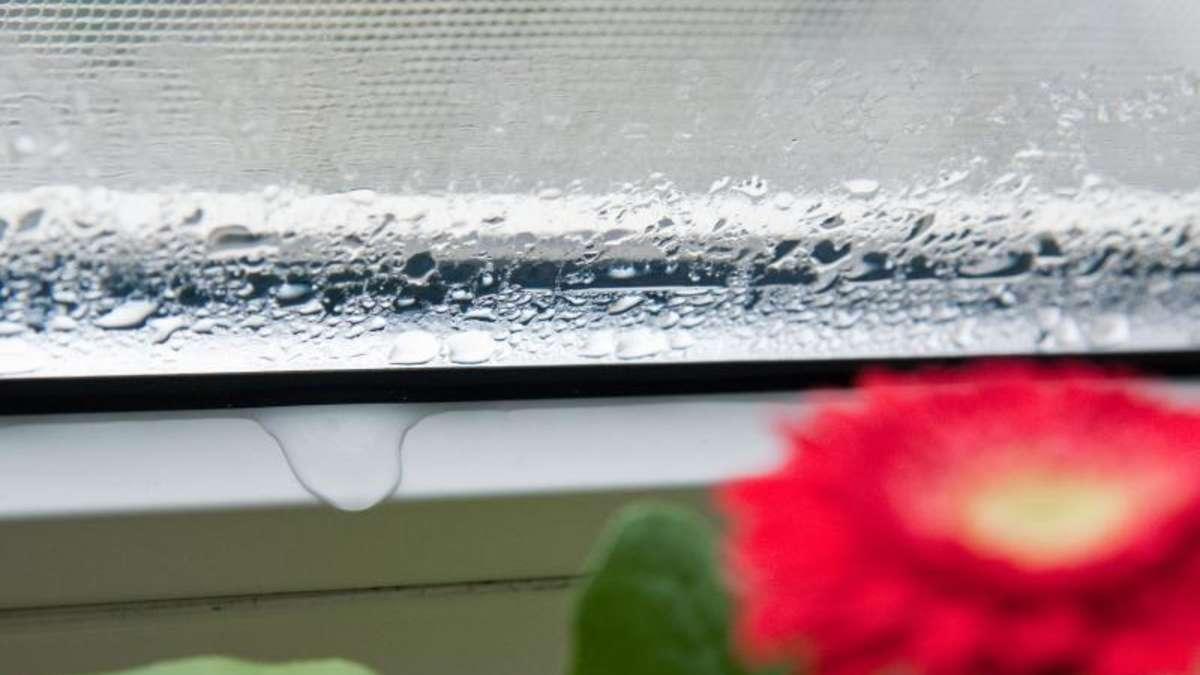 beschlagene scheiben des wintergartens nehmen pflanzen licht wohnen. Black Bedroom Furniture Sets. Home Design Ideas