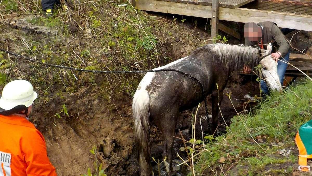 Pferde Unfall