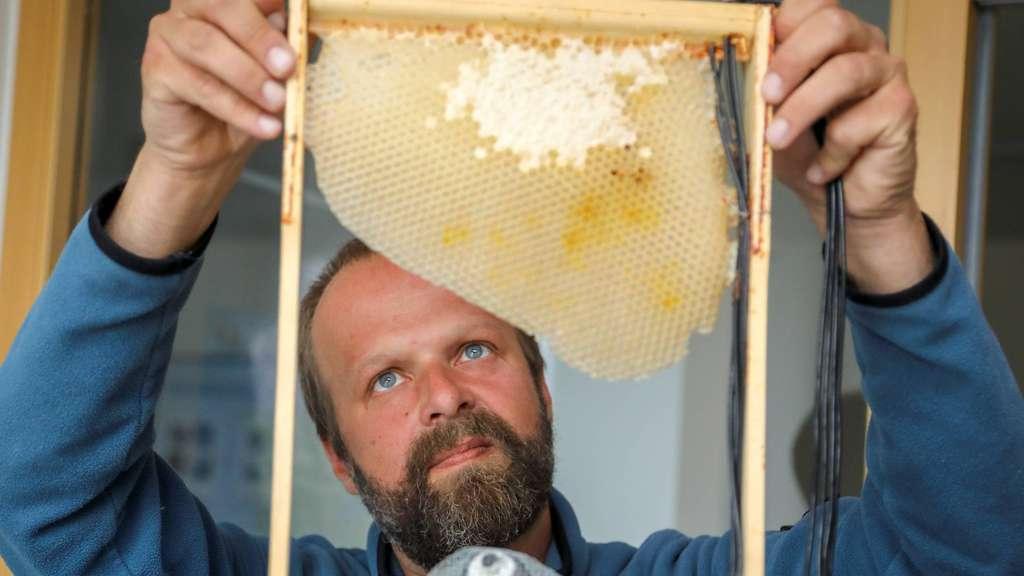 "Bremen: Uni-Projekt ""Bee Observer"" liefert Imkern und ..."