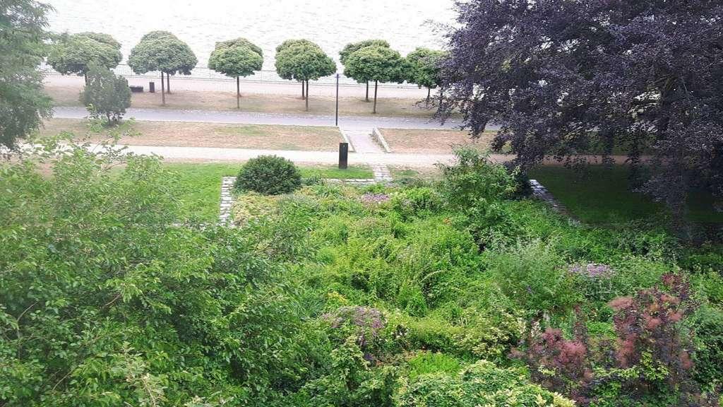 Bremen Im Stadtgarten Vegesack Wachsen Auf Zwei Hektar Flache Mehr