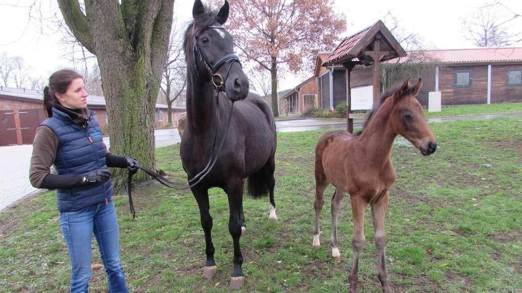 Pferdezüchter