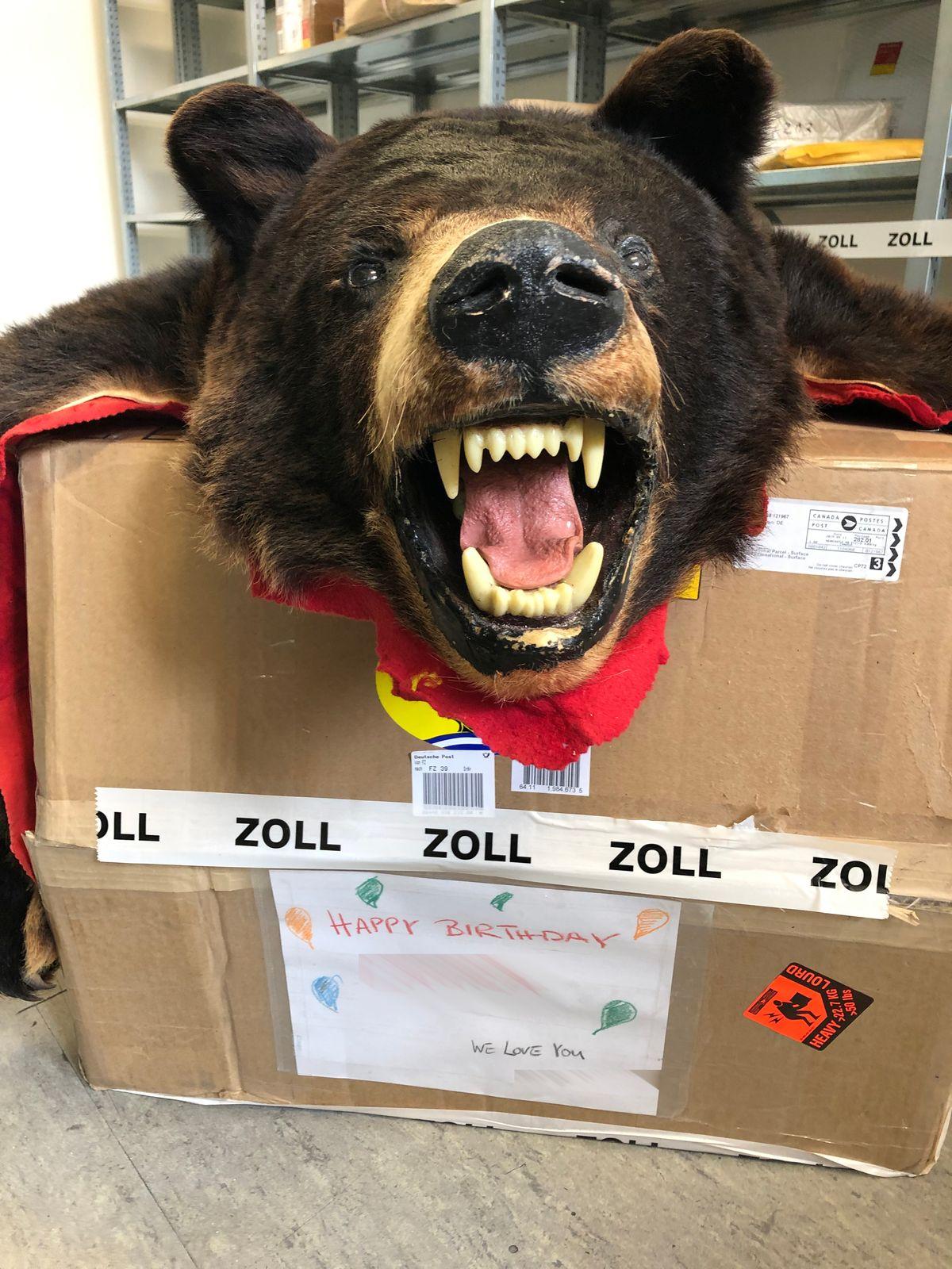 Zweijähriges Mädchen Bekommt Toten Schwarzbären Per Post