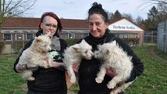 Tierheim Verden Walle West Highland Terrier Warten Auf Neue Besitzer Verden