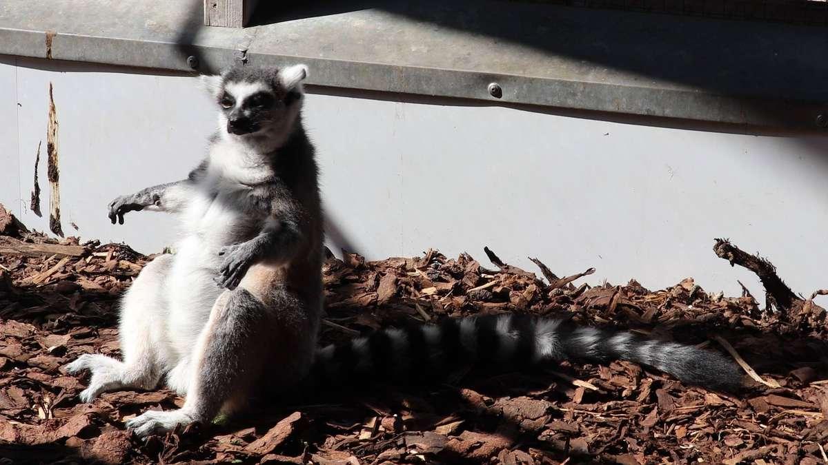 Maik Otto vom Tierpark Petermoor erklärt, wie der Betrieb weitergeht