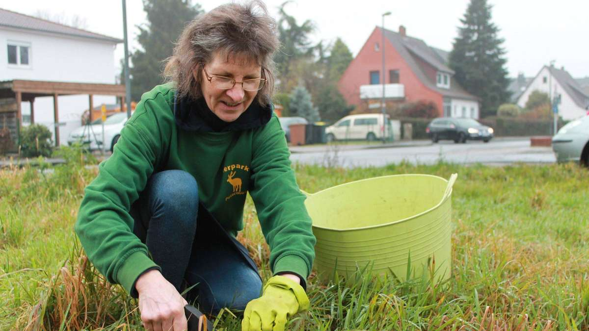 Gras sammeln für den Tierpark