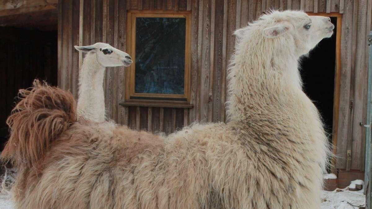 Frostige Stimmung im Tierpark