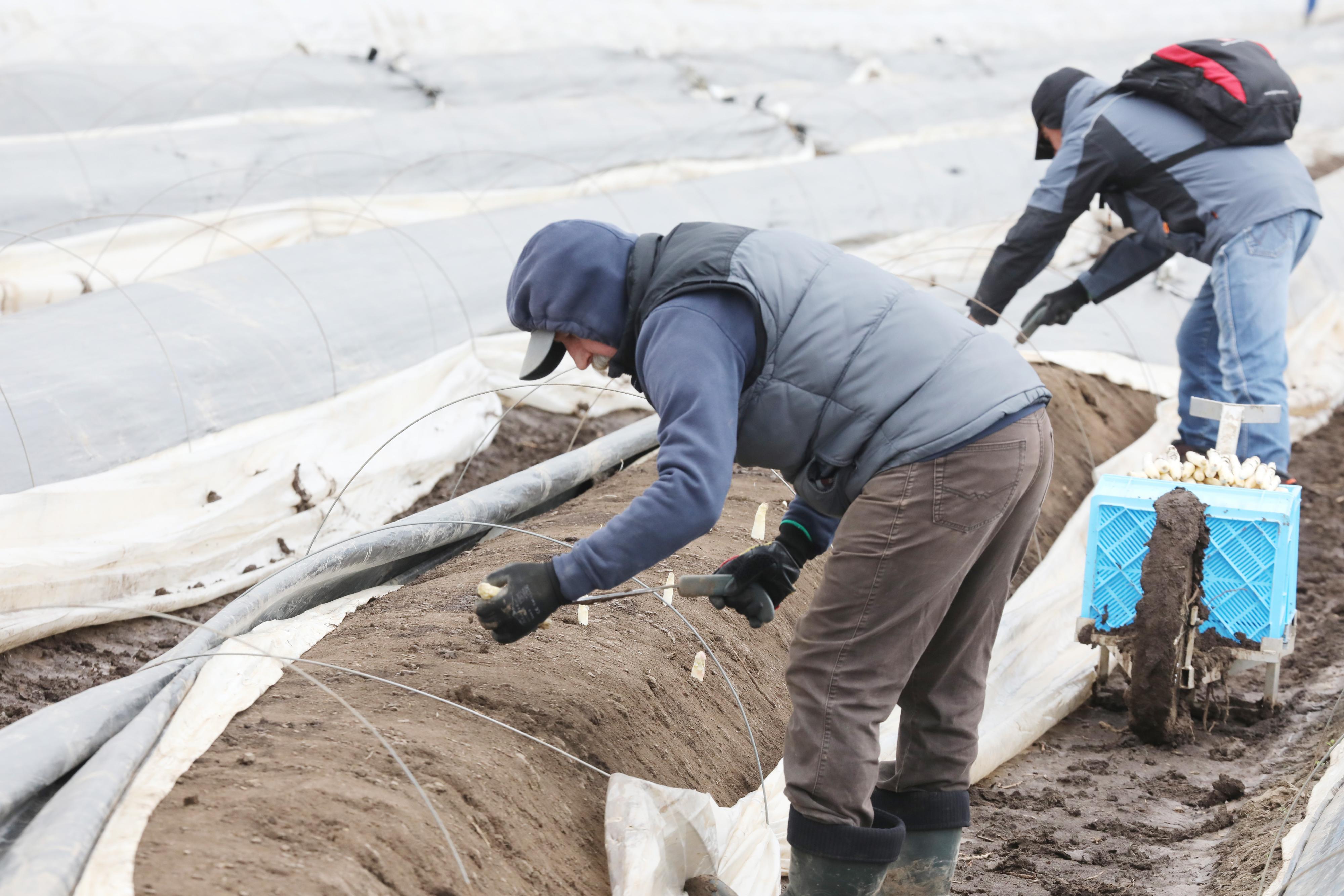 Corona-Ausbruch auf Spargelhof bei Sulingen: Erntehelfer erheben schwere Vorwürfe